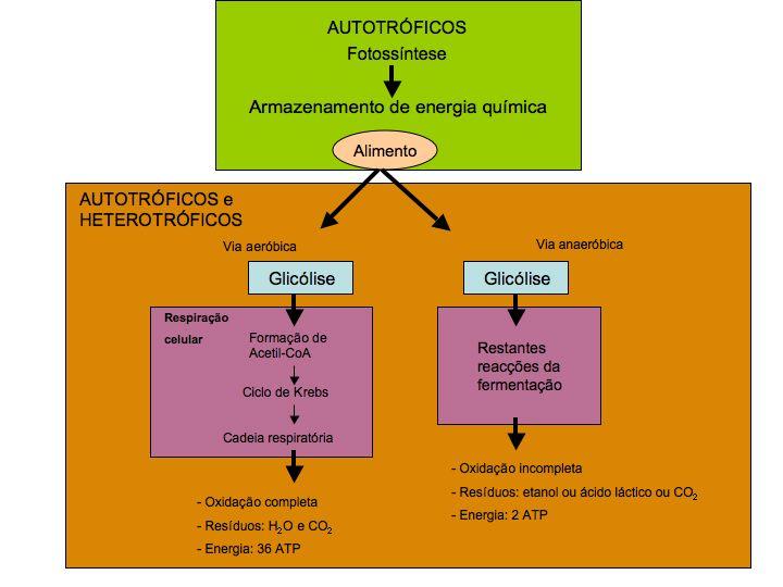 download fahrzeuggetriebe: grundlagen, auswahl, auslegung und konstruktion (vdi